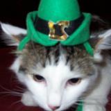 cat in hat cynthia's