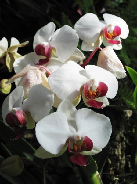 orchids 11
