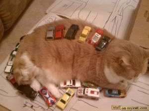 cat-cars