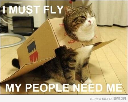 catplane2