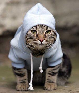 cat hoodie3