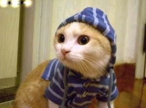 cat-in-a-hoodie-sweater