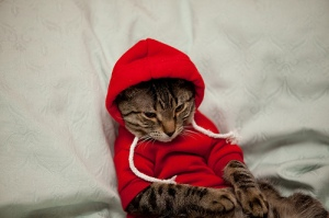 cathoodie2
