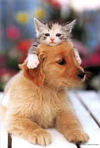 dogs-cats-hats-9