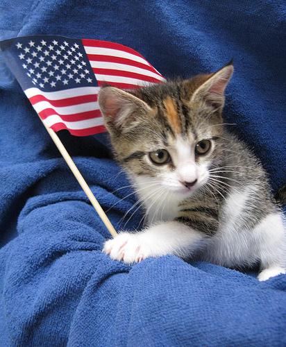 cat flag3