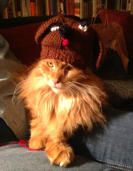 Sam in his doggie hat