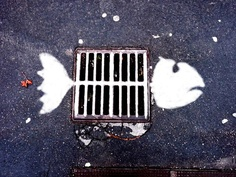 drain fish