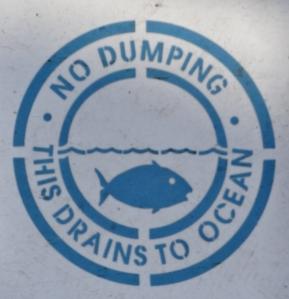 drain fish2