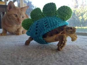 turtle knitting and cat