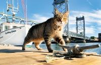 kittery cat