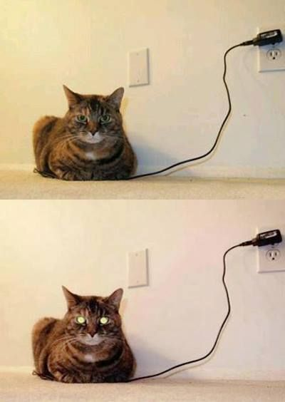 CHARGED CAT