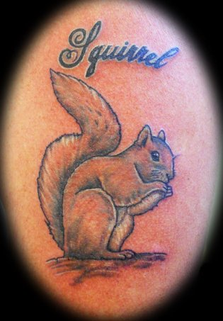 squirrel1