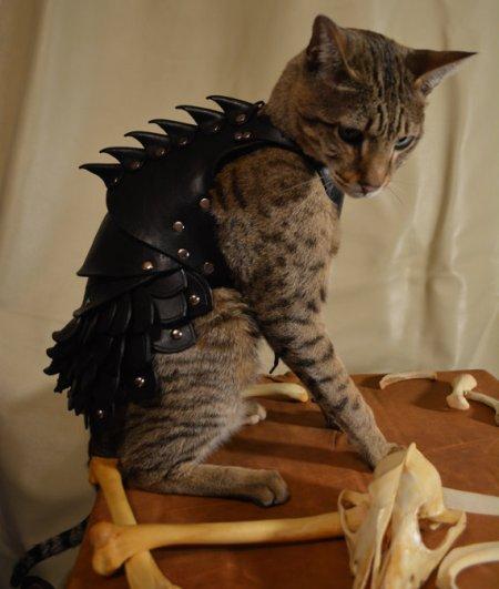 kitty armor