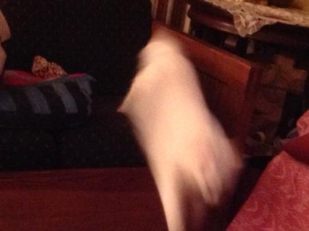 flying Hobbes