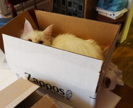 Hobbes in a box