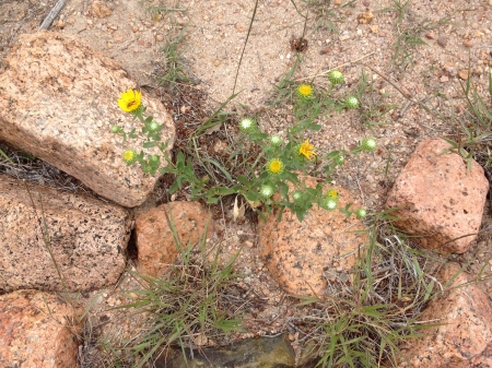 AF wildflowers