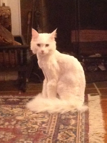 Hobbes shaven 2
