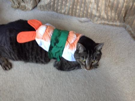 cat sushi1
