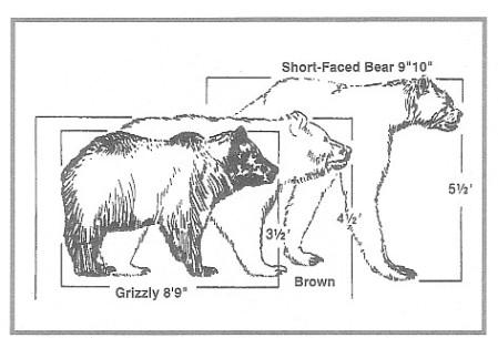 big bear1