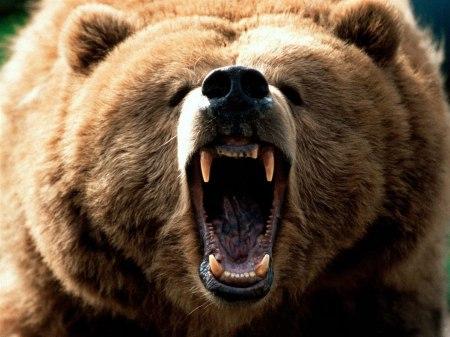big bear4