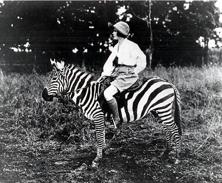 Osa Zebra