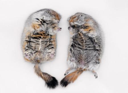 0215-usa-hibernating-squirrels-670