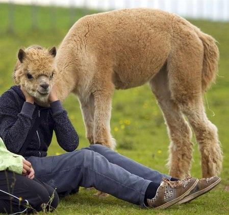 alpaca human