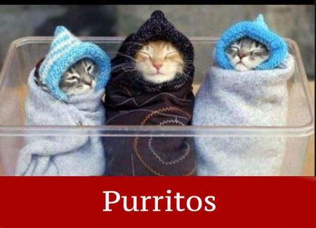 purritos