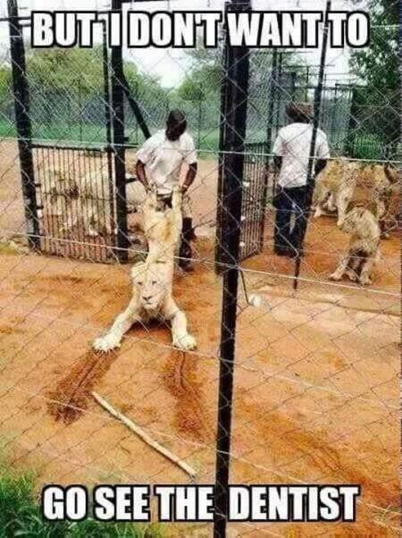 dentist lion