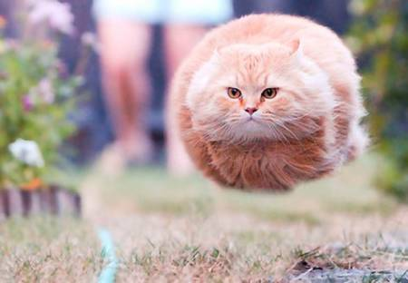 perfectly-timed-funny-cat-pictures-5