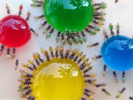 ants-2