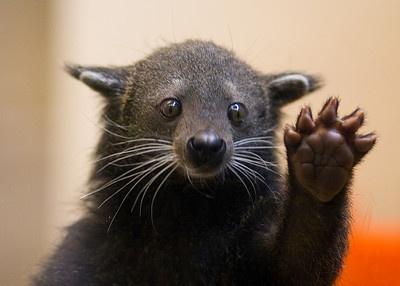 bearcat2