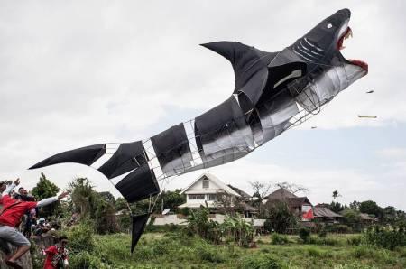 kite shark