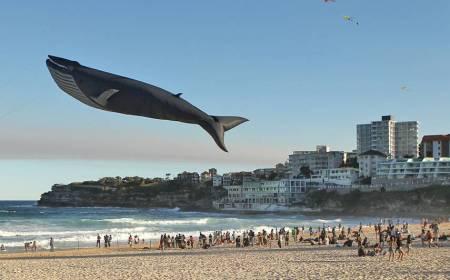 kite whale
