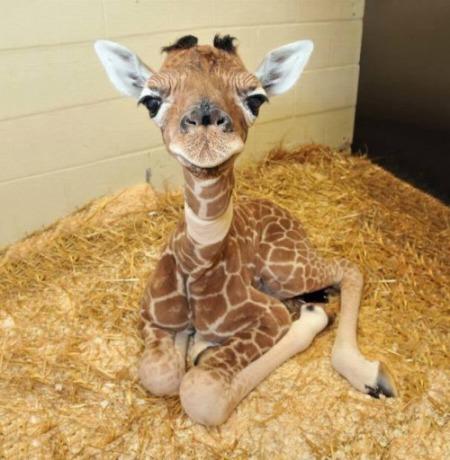 baby animal2