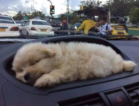 puppy holder