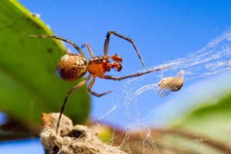 spider-1024x683