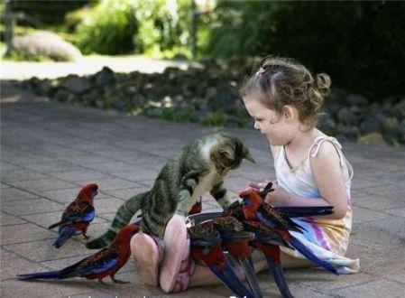 kitten-birds