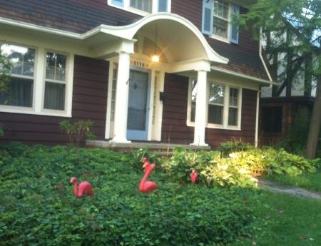 flamingos-of-october