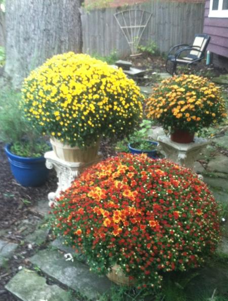 mums-of-october-2