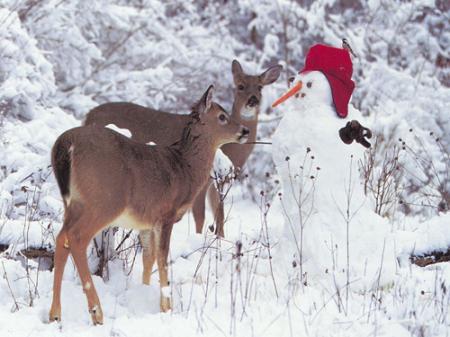 6-christmas-animals-1-1