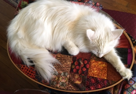 hobbes-and-quilt
