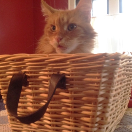 sam-in-basket