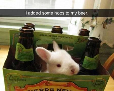 bunny-hops